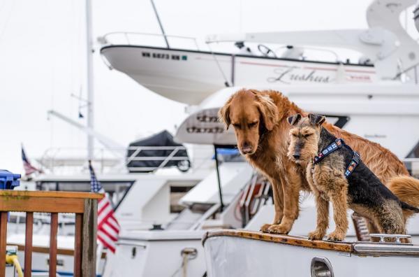 mascotas a bordo.